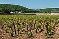 Vineyards near Gevrey-Chambertin (7309856342).jpg