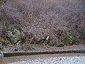 Vratza, Bulgaria - panoramio.jpg