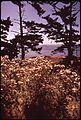 WILD FLOWERS ALONG THE COAST OF SAN JUAN ISLAND - NARA - 545279.jpg