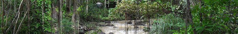 File:WV banner Santander Colombia Jungle stream in Parque Gallineral.jpg