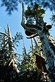 Walbran Valley Canopy Research.jpg