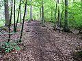 Waldweg - panoramio (14).jpg