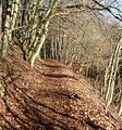 Waldweg zum Rahnenhof - panoramio.jpg