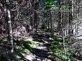 Wanderweg bei Pfalzgrafenweiler - panoramio (1).jpg