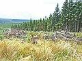 Wark Forest, near Blackaburn Lough - geograph.org.uk - 212635.jpg
