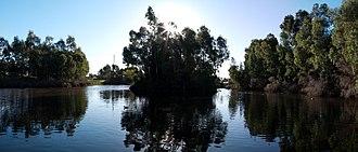 Warriparinga - One of the small ponds that make up part of the wetlands.