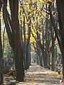 Warszawa, Cmentarz Powązkowski - fotopolska.eu (185901).jpg