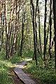Weg durch das Moor am Holzöstersee.JPG