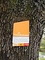 Wiener Naturdenkmal 829 - Speierling (Döbling) c.JPG