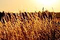 Wiese am Waldrand in der Abendsonne (Thüringer Schiefergebirge 2013-07-15 WDPA ID 378705).jpg