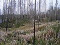 WildFireAreaNHorken0809-view.JPG