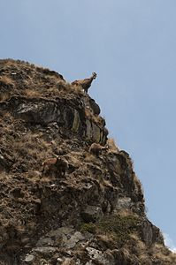 Wildlife Sangarmatha National Park.jpg