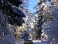 Winter - panoramio (48).jpg