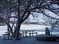 Winter Scene Behind OCTC Library 11-17-14.JPG