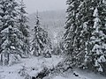 Winter is coming in Bukovina's Hearth (Ciocanesti, Romania).jpg
