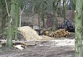 Woodland Clearance at Blackhill Plantation, near Halfpenny Green, Staffordshire - geograph.org.uk - 365941.jpg
