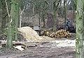 Woodland Clearance at Blackhill Plantation, near Halfpenny Green, Staffordshire - geograph.org.uk - 365941.jpg
