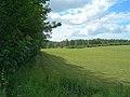 Woodland Edge - geograph.org.uk - 519164.jpg