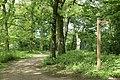 Woodland near Neumann's flash - geograph.org.uk - 1538951.jpg