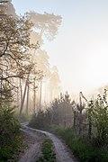 Woods near Hodonín 2020 03.jpg