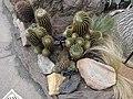 World Deserts - US Botanic Gardens 12.jpg