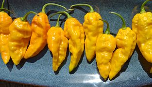 Yellow Bhut Jolokia Ghost Pepper.jpg