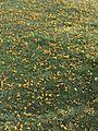 Yellow farms.jpg