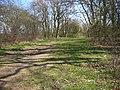 Yelnow Lane near Odel Great Wood - geograph.org.uk - 393045.jpg
