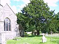 Yew Tree, Church of St Mary the Virgin, Sixpenny Handley - geograph.org.uk - 855323.jpg
