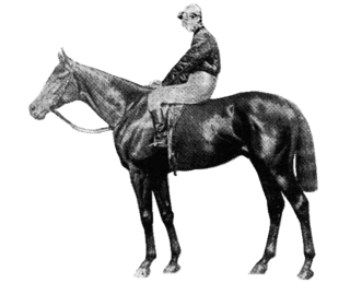 Your Majesty (horse) British-bred Thoroughbred racehorse