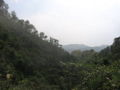 Yunmen mountain.jpg