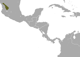 Zacatecas Shrew area.png