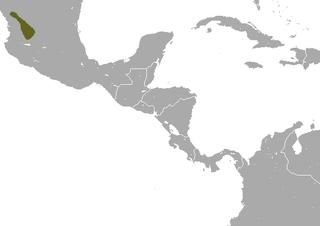 Zacatecas shrew Species of mammal