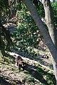 Zoologická zahrada Tábor - Větrovy (48).jpg