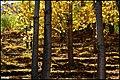 ((( پائیز در حومه مراغه ))) - panoramio.jpg
