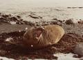 (Jubany) Recuento de mamíferos (13).png