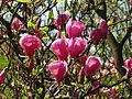 Ботанічний сад ім. І.Фоміна IMG 8322.jpg