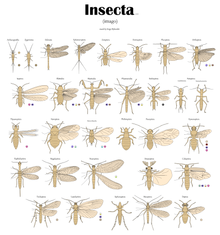 разновидность насекомых фото