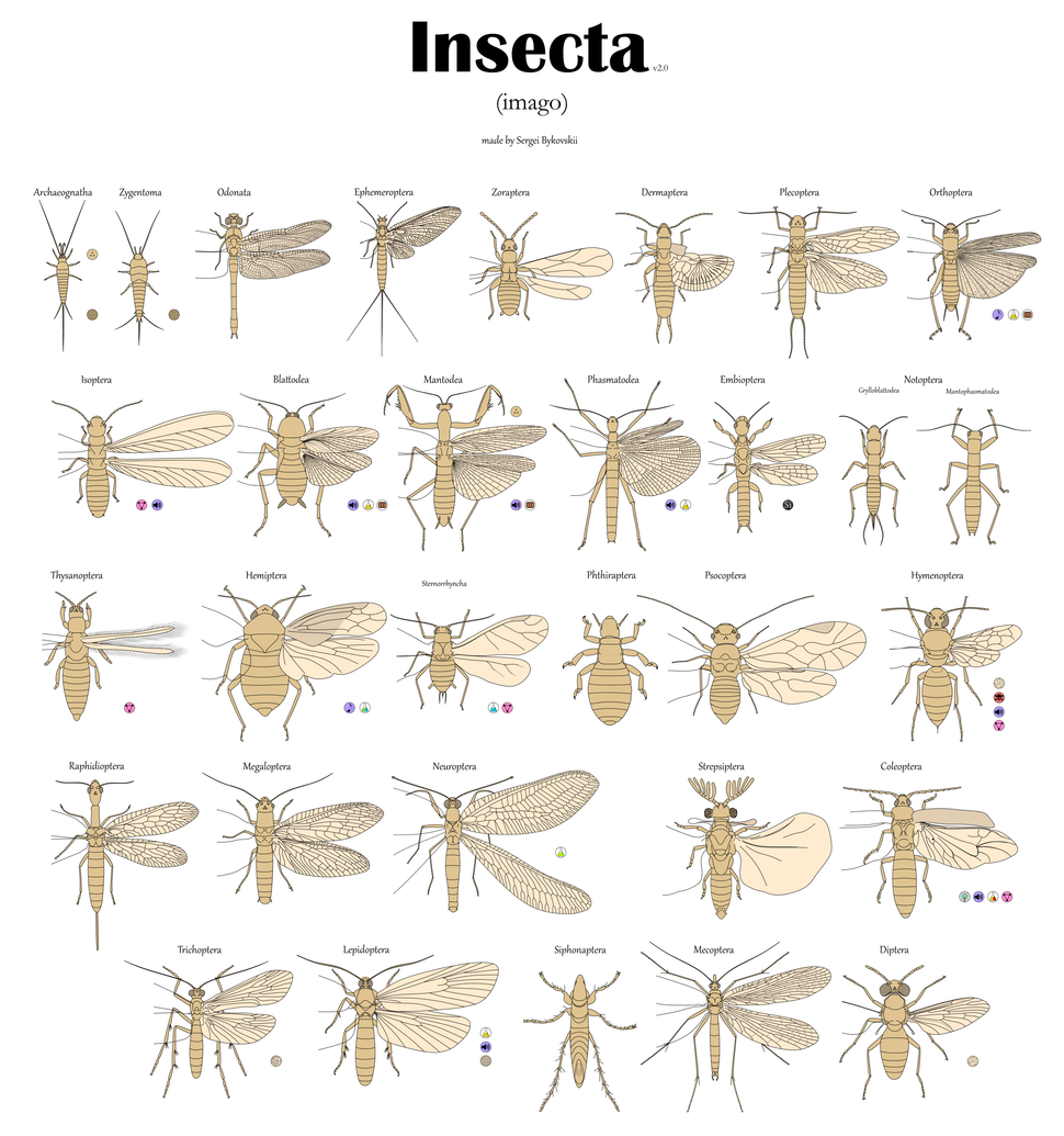 Все отряды насекомых Имаго v2.0