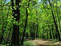 Голосіївський ліс IMG 8455.jpg
