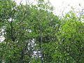 Дендрологічний парк 119.jpg