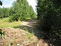 Дорога идущая на север от реки Лепсари - panoramio.jpg