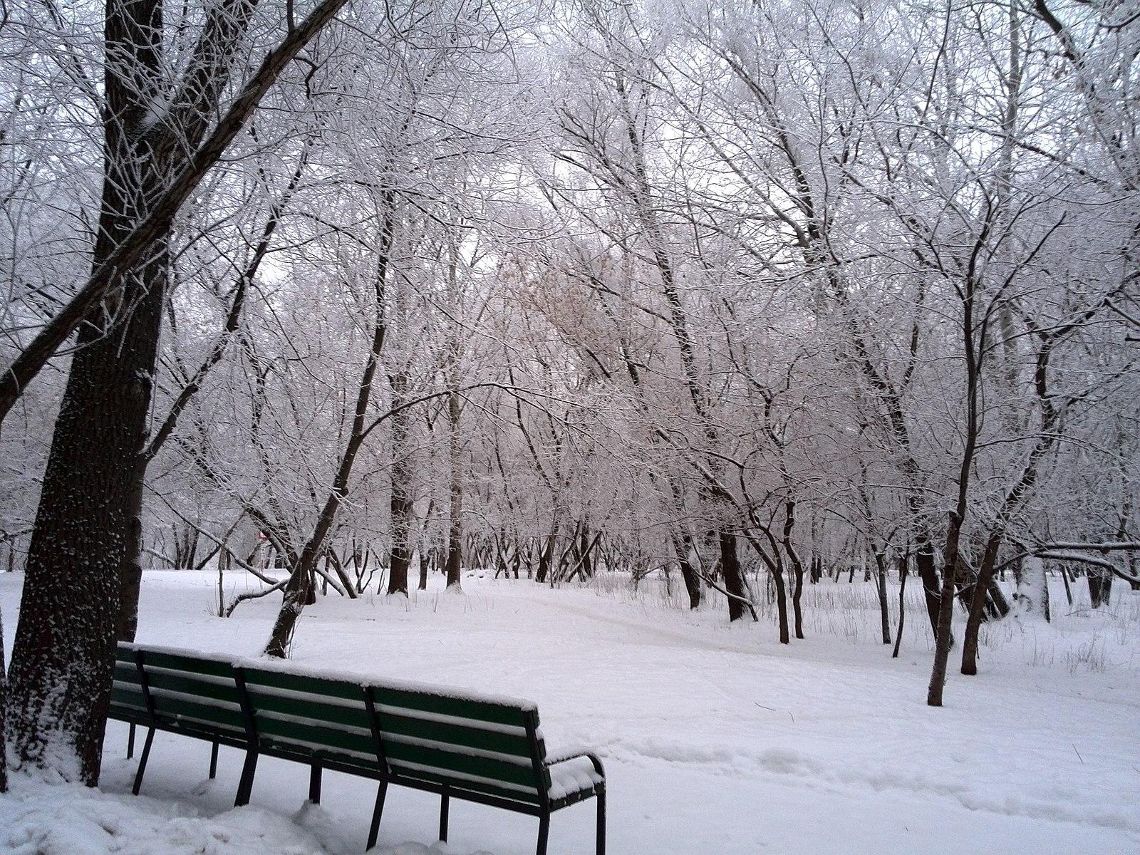 центральный, киев зима на бульварах москвы фото бомбер, котором