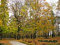 Кочубеївський парк в Батурині 001.jpg