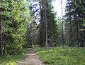 Лешуконевское - panoramio - Andris Malygin (56).jpg