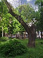 Маріїнський парк 03.JPG