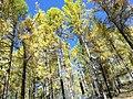 Осенний лес в горах Восточных Саян, Бурятия, Россия.jpg