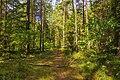 По лесным дорожкам MG 9398.jpg
