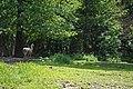 Рівне, урочище Сосонки в зопарку DSC 6327.jpg