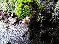 Скелі МОДРу 36 - два мікроравлики.jpg